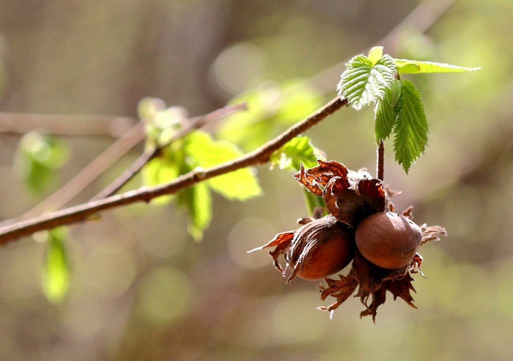 Прогулка по весеннему лесу (Близ Коврова) 05