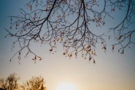 Расцветающий парк Пушкина в лучах апрельского заката