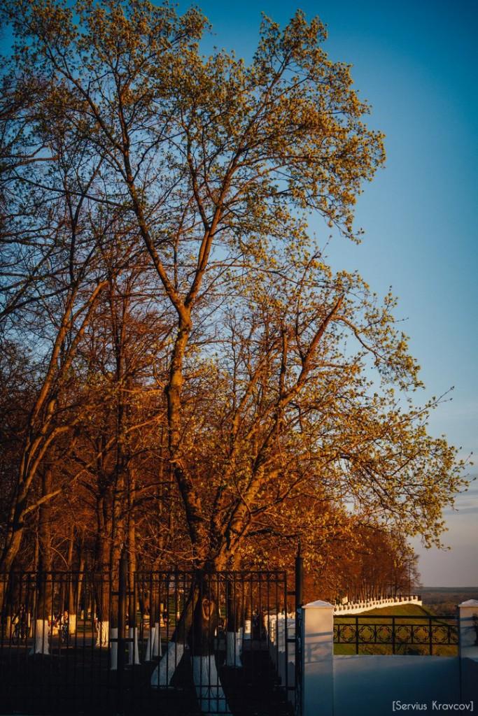 Расцветающий парк Пушкина в лучах апрельского заката 02