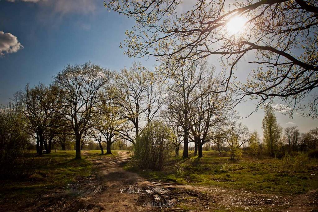 Солнечный майский день. Пойма реки Клязьма 01