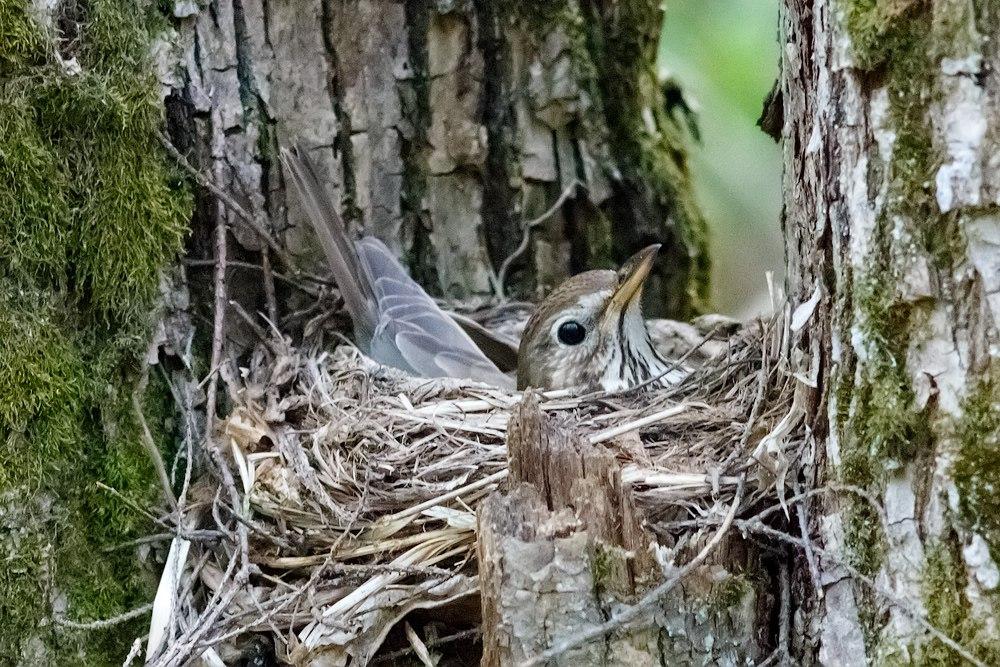 У птиц начался период высиживания яиц 01
