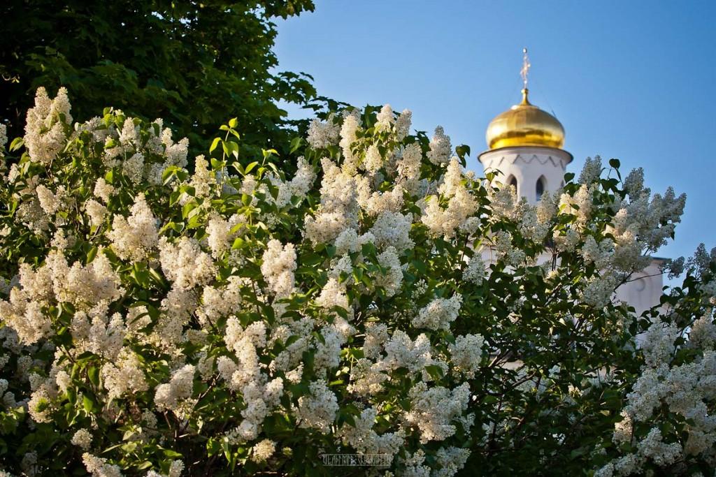 2016.05.18 Майский вечер во Владимире 21