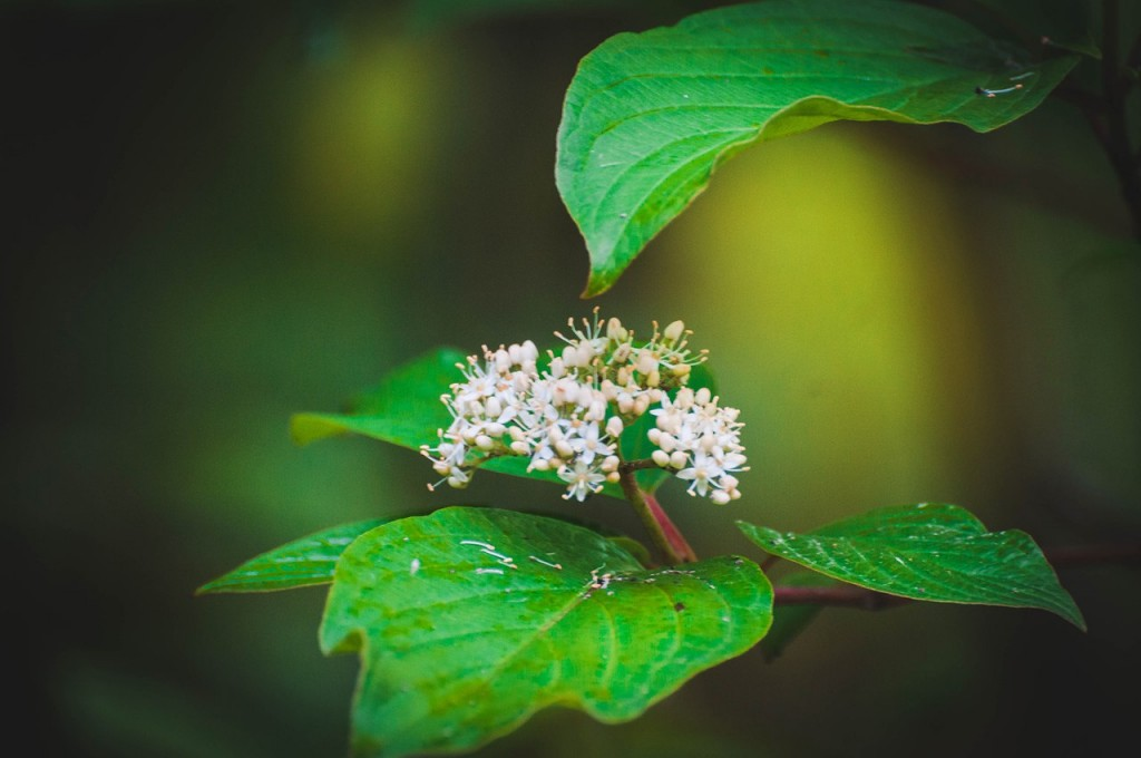 Весенние цветы Бориса Пучкова 04