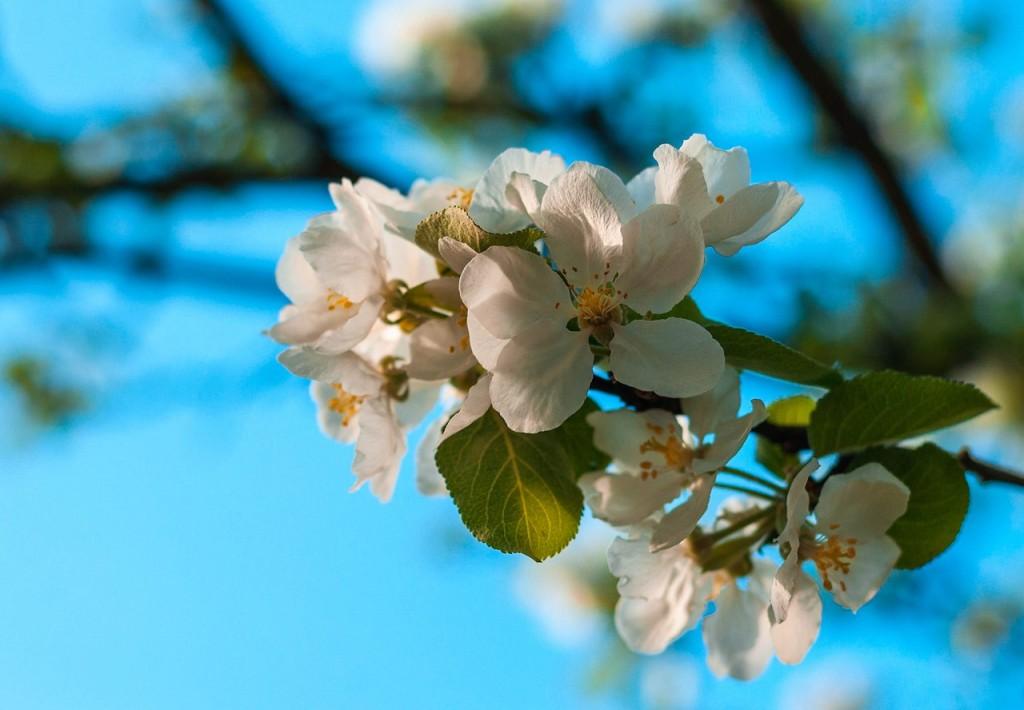 Весенние цветы Бориса Пучкова 05