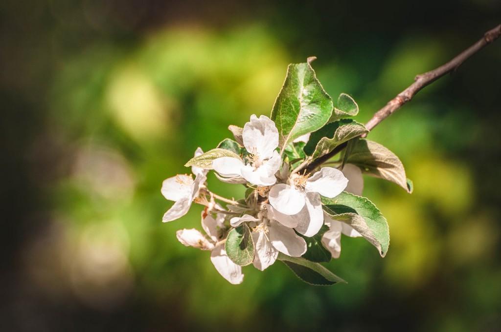 Весенние цветы Бориса Пучкова 07
