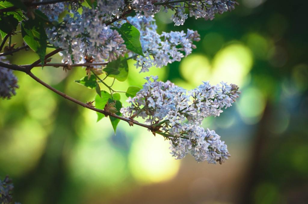 Весенние цветы Бориса Пучкова 08