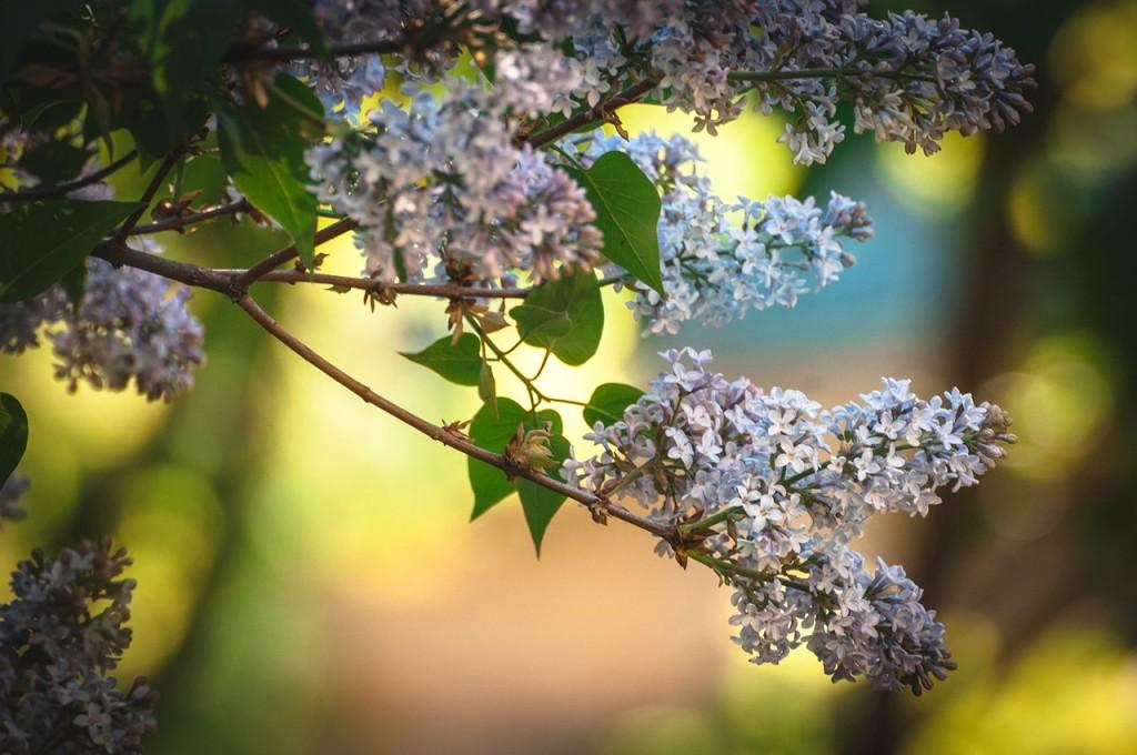Весенние цветы Бориса Пучкова 09