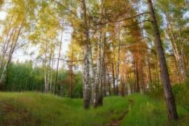 Гуща леса у берега Исаевской плотины г.Вязники, Владимирская обл.