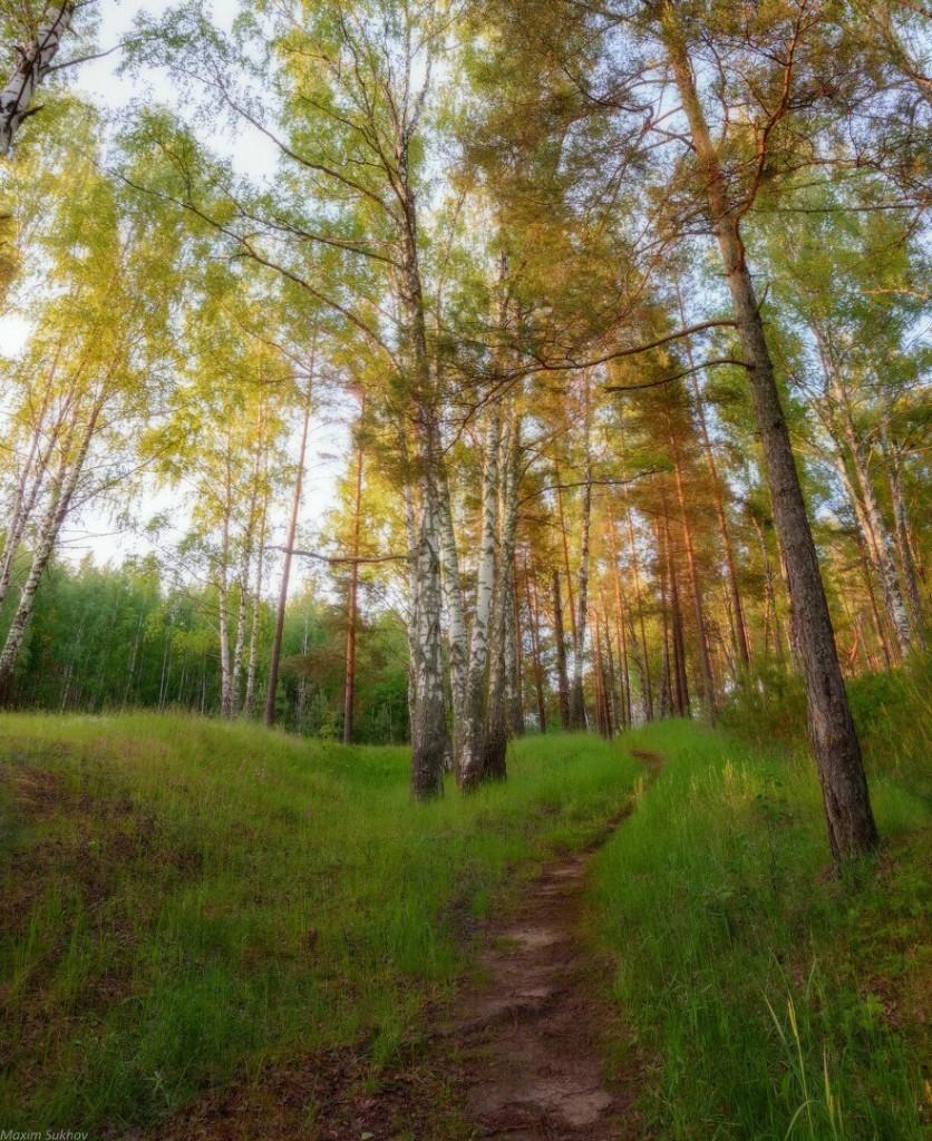 Гуща леса у берега Исаевской плотины г.Вязники, Владимирская обл 01