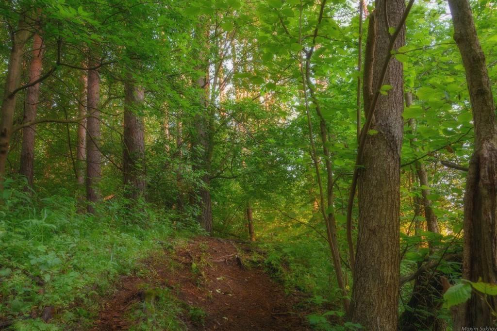 Гуща леса у берега Исаевской плотины г.Вязники, Владимирская обл 03