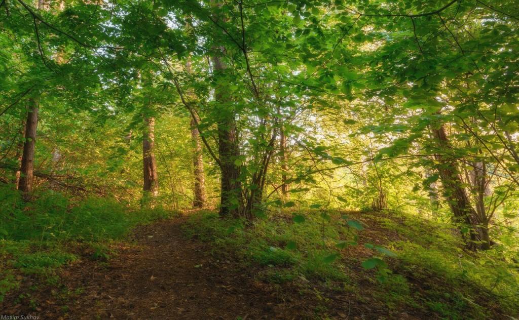 Гуща леса у берега Исаевской плотины г.Вязники, Владимирская обл 04