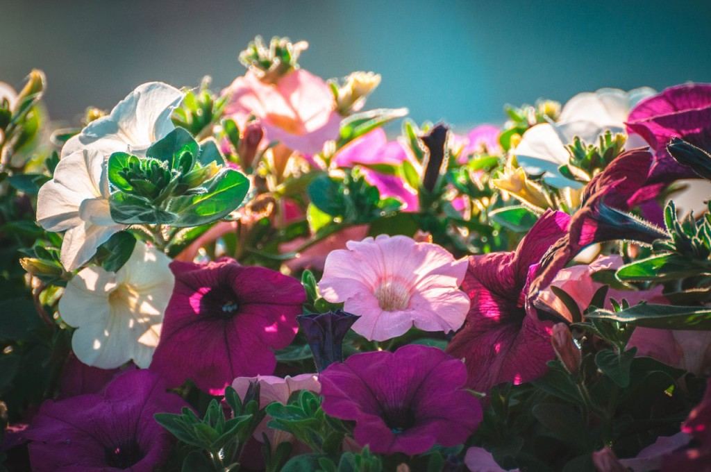 Дети-цветы жизни 08