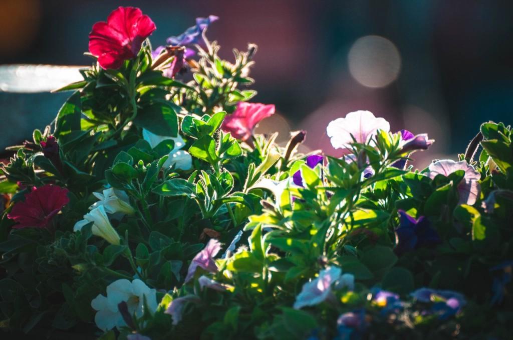 Дети-цветы жизни 09