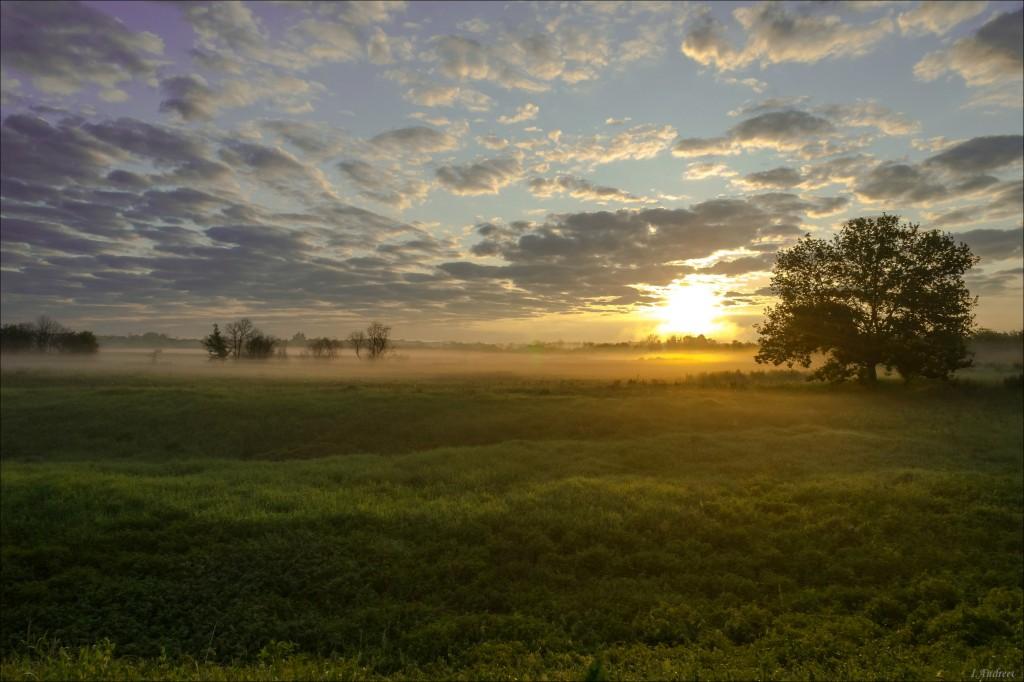 Июньский восход на лугах клязьменской поймы