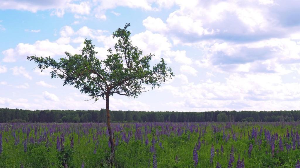 Ковровский район, окрестности озера Переханово 02