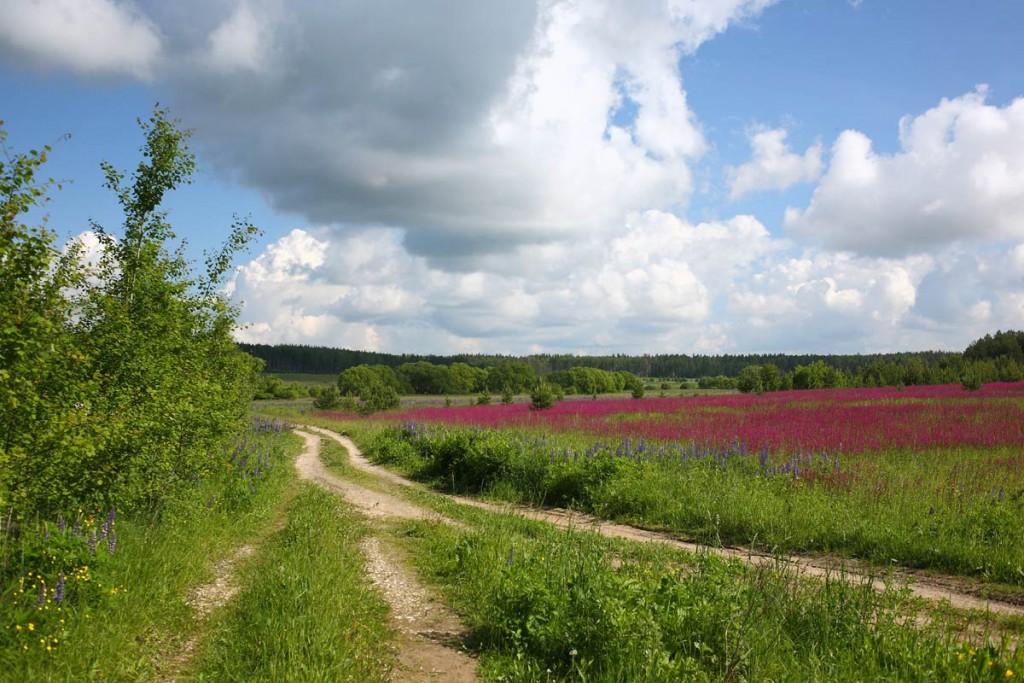 Краски лета. Деревня Медынцево, Ковровского района 01