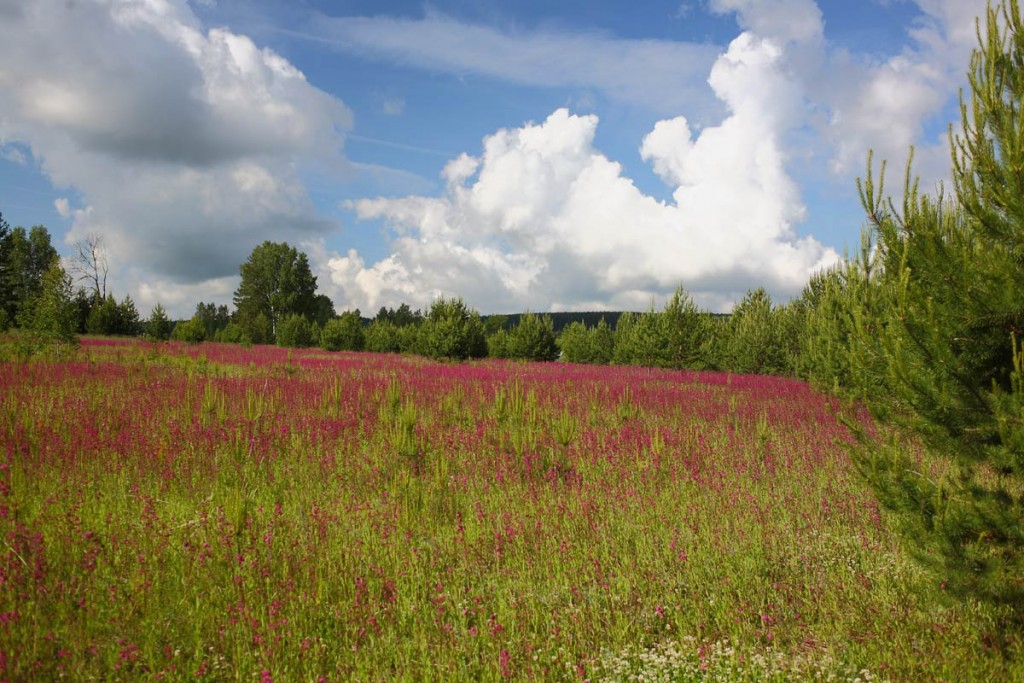 Краски лета. Деревня Медынцево, Ковровского района 03