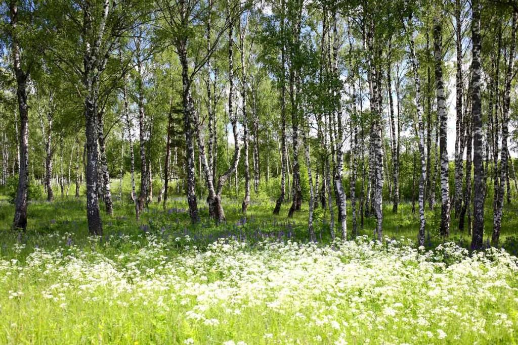 Лето в окрестностях села Великово Ковровского района 02