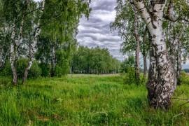 Пасмурное июньское утро в Александровском районе