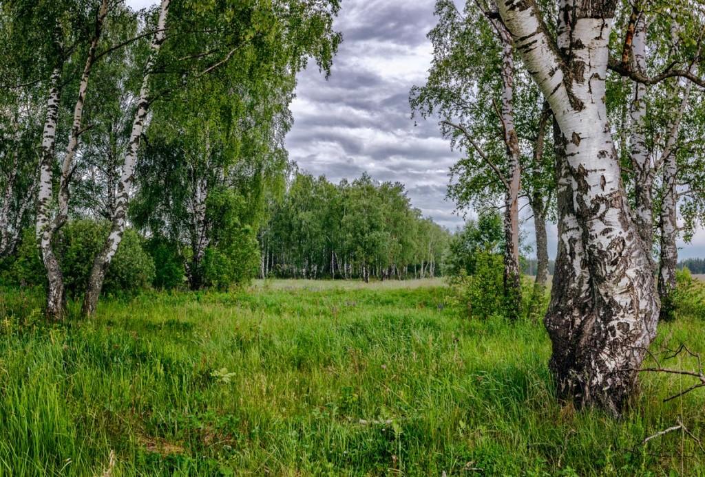 Пасмурное июньское утро в Александровском районе 01