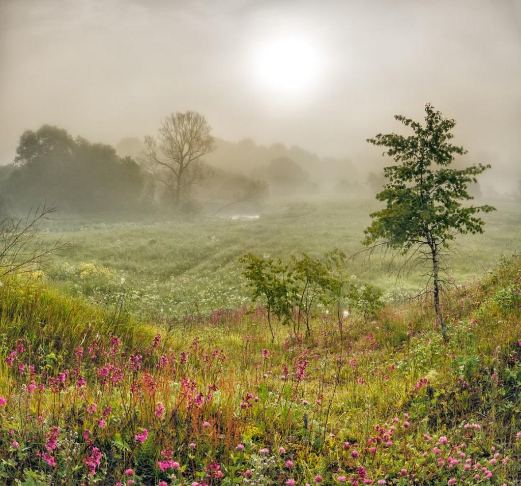 Туманное летнее утро в Александрове 01