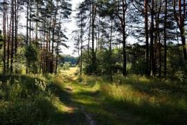 Воскресное утро в летнем Ковровском лесу