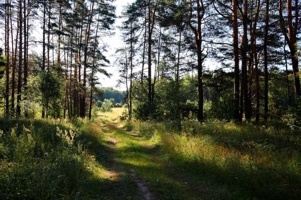 Воскресное утро в лесу 01