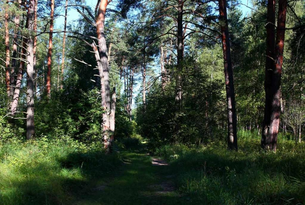 Воскресное утро в лесу 03
