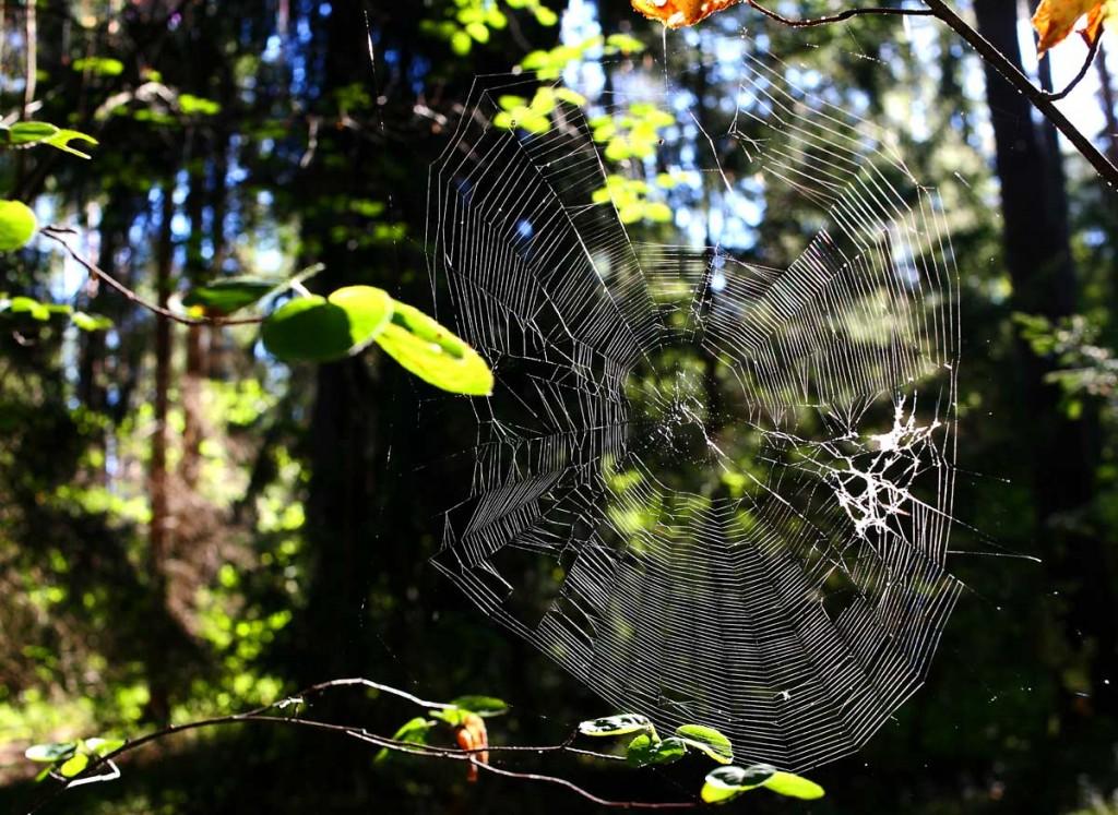 Воскресное утро в лесу 05
