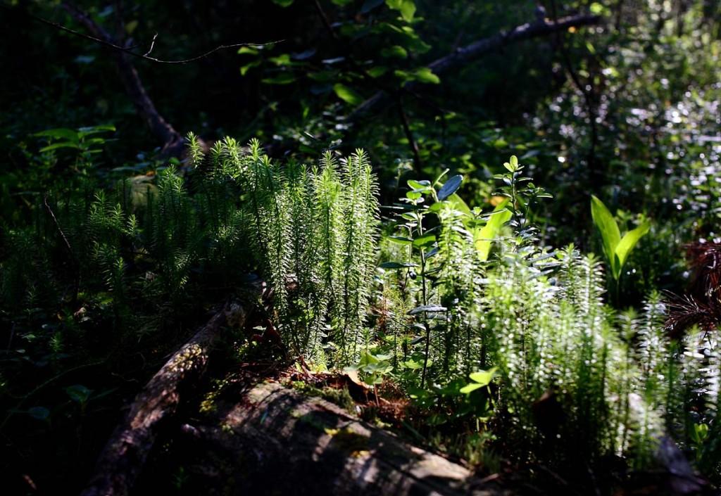 Воскресное утро в лесу 06