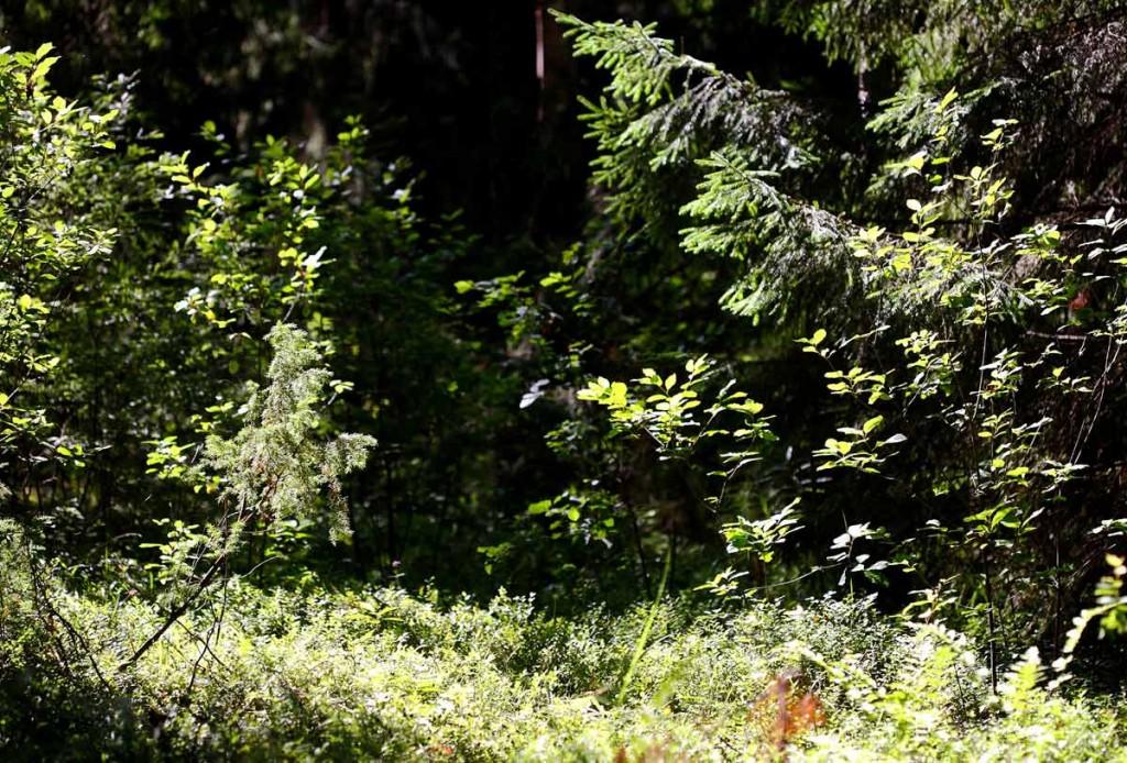 Воскресное утро в лесу 07