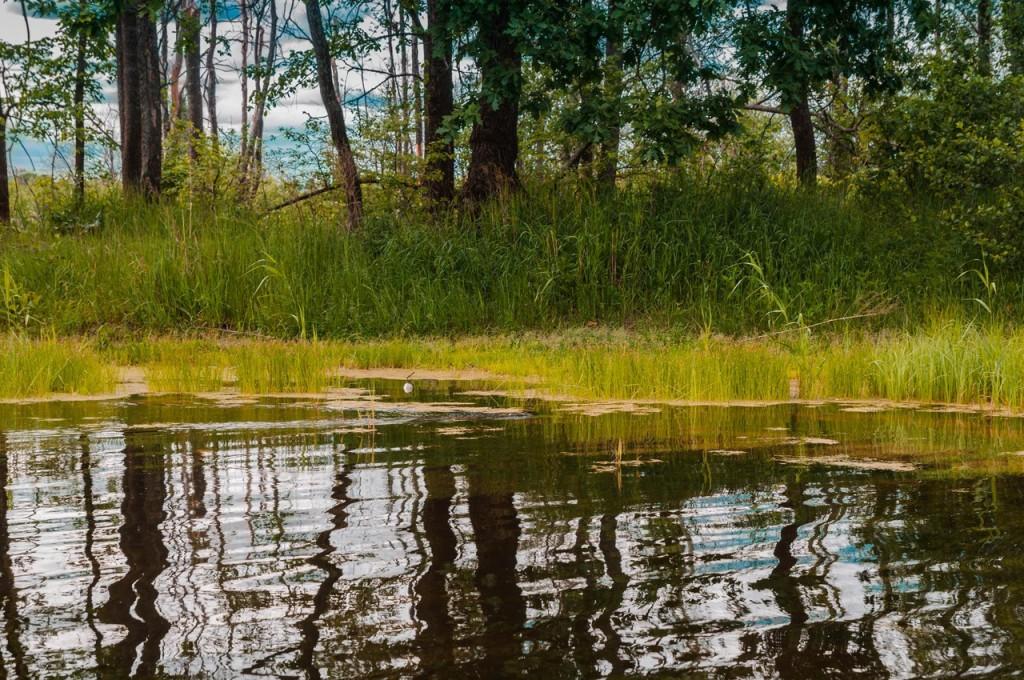 В Загородном парке Владимира летом 05