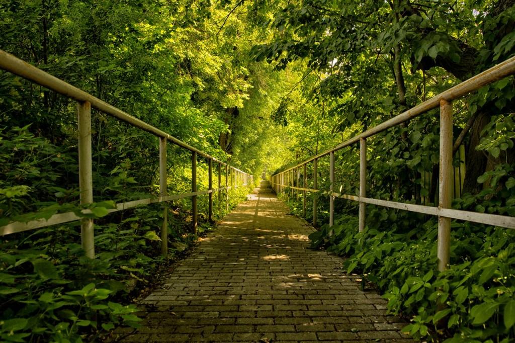 Зелёное лето тенистых аллей
