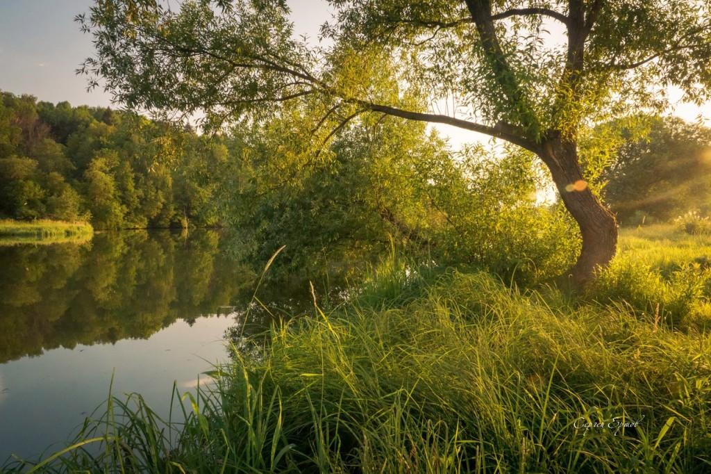 Солнцем залитый берег Содышки