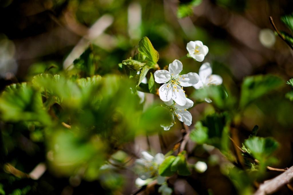 Весна во Владимирских парках 05