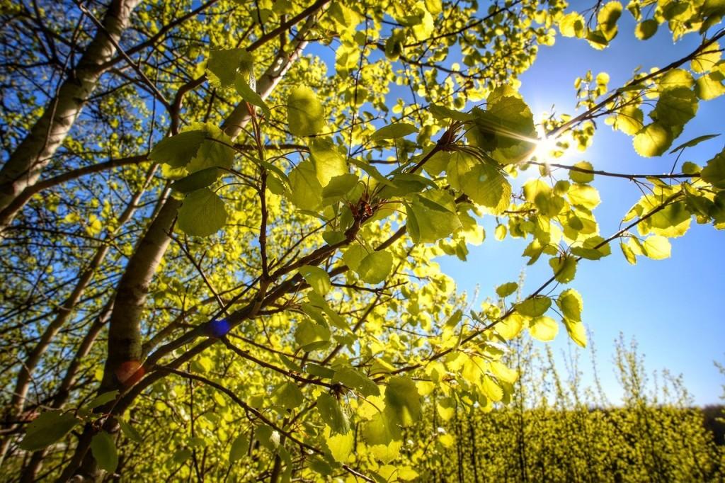 Весна во Владимирских парках 06