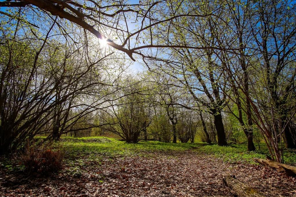 Весна во Владимирских парках 07