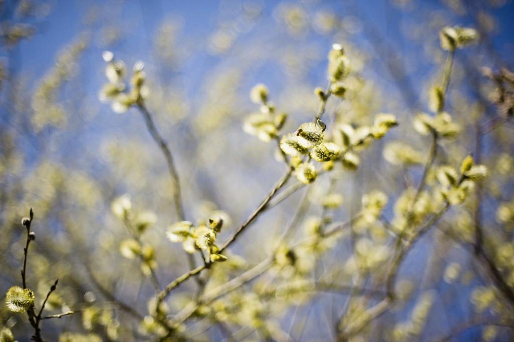 Весна во Владимирских парках 08