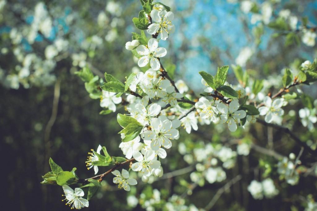 Весна в городе-на-Оке 02