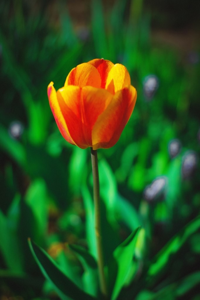 Весна в городе-на-Оке 05