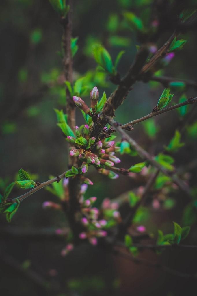 Весна в городе-на-Оке 06