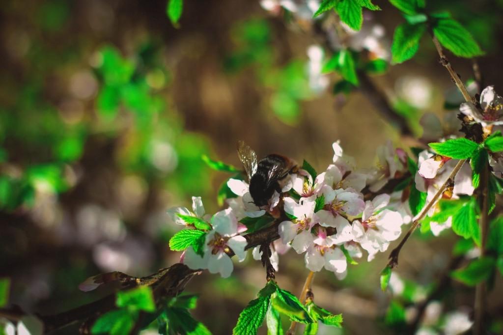 Весна в городе-на-Оке 07