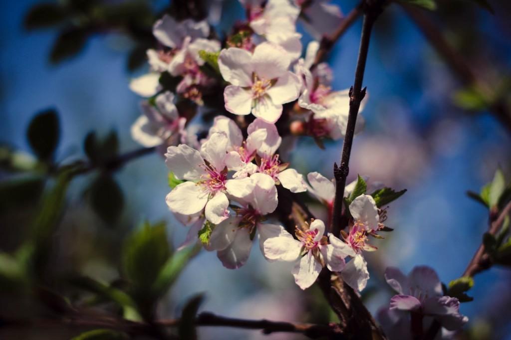 Весна в городе-на-Оке 08