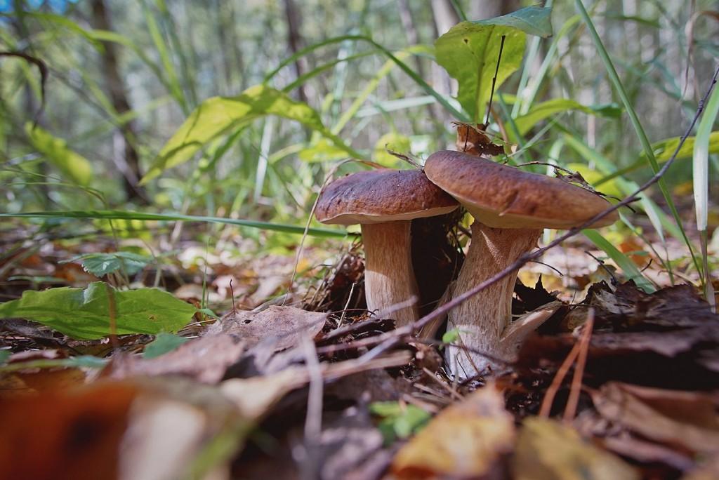 За грибами в августе 02