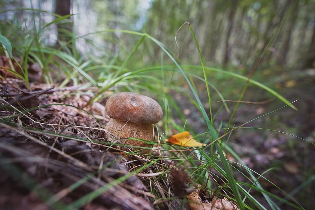 За грибами в августе 03