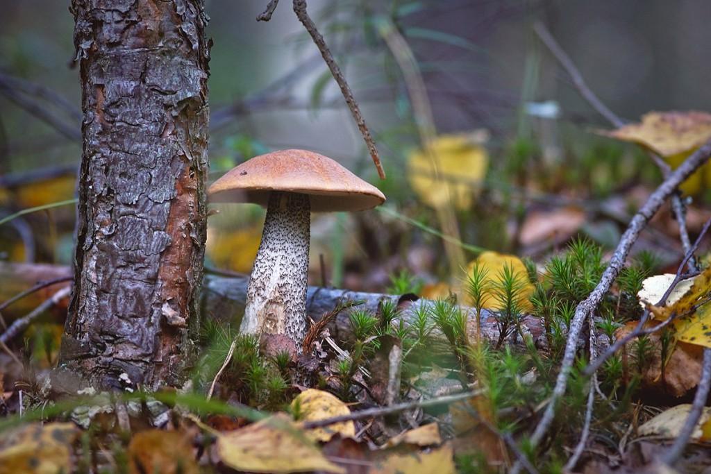 За грибами в августе 04