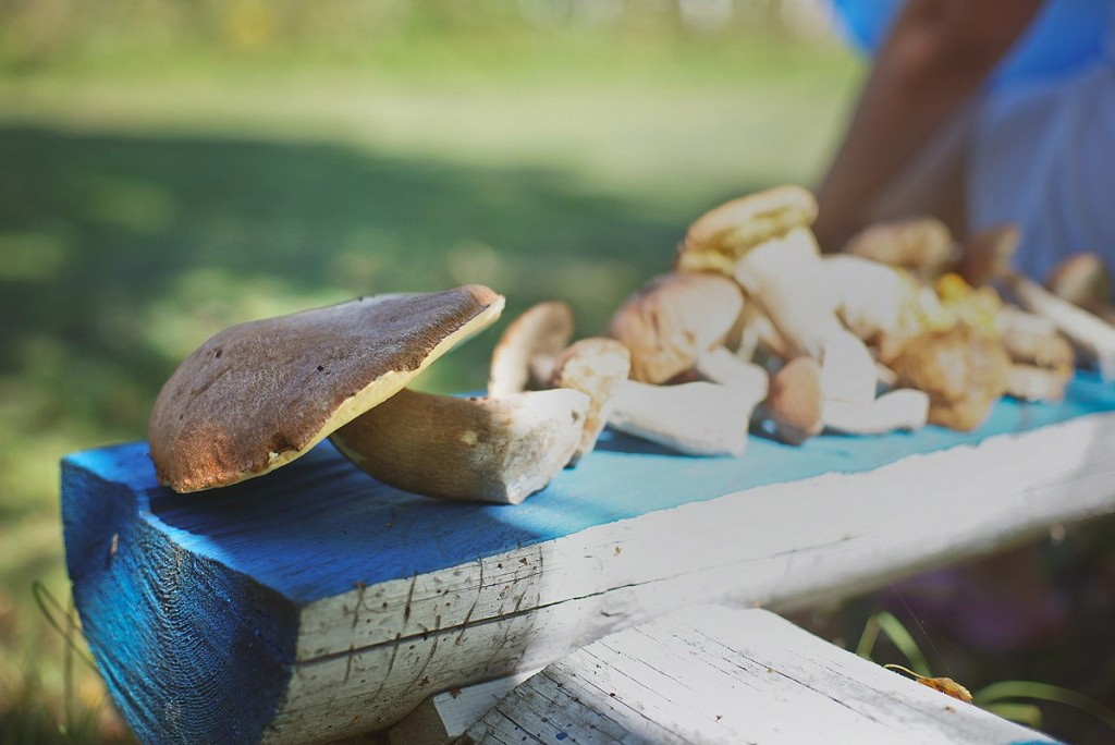 За грибами в августе 06