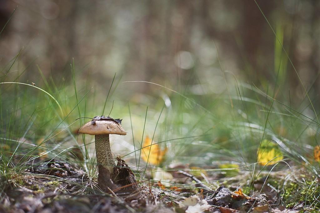 За грибами в августе 07