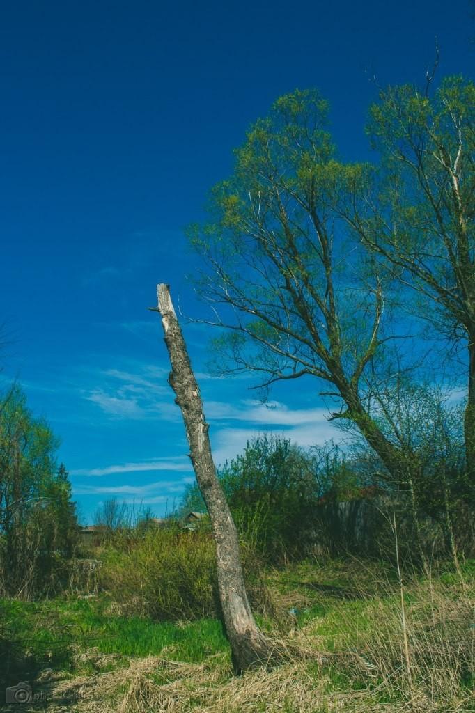 Природа города Меленки 06