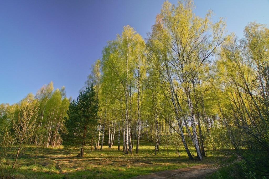 Свежесть весеннего леса от Владислава Тябина 01